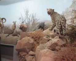 موزه محیط زیست تربت حیدریه