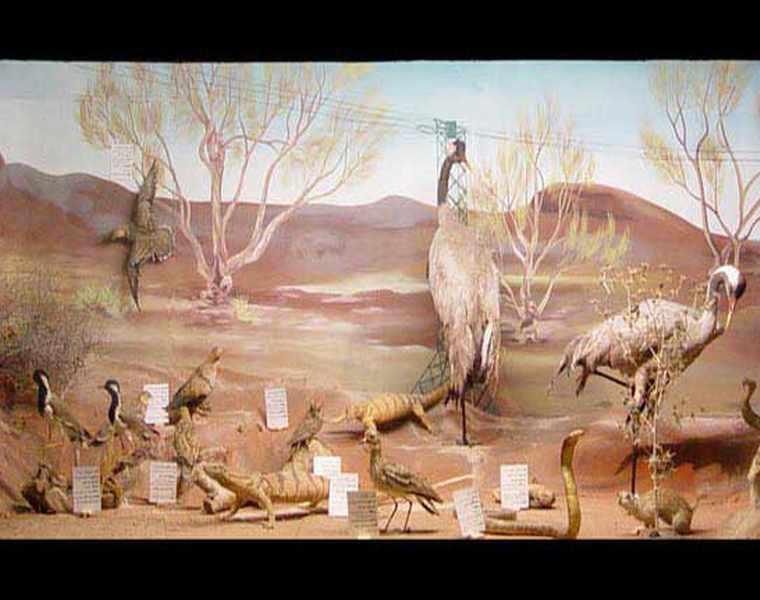 موزه تاریخ طبیعی نیشابور