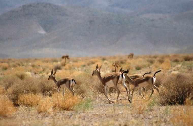 منطقه حفاظت شده سیرخون
