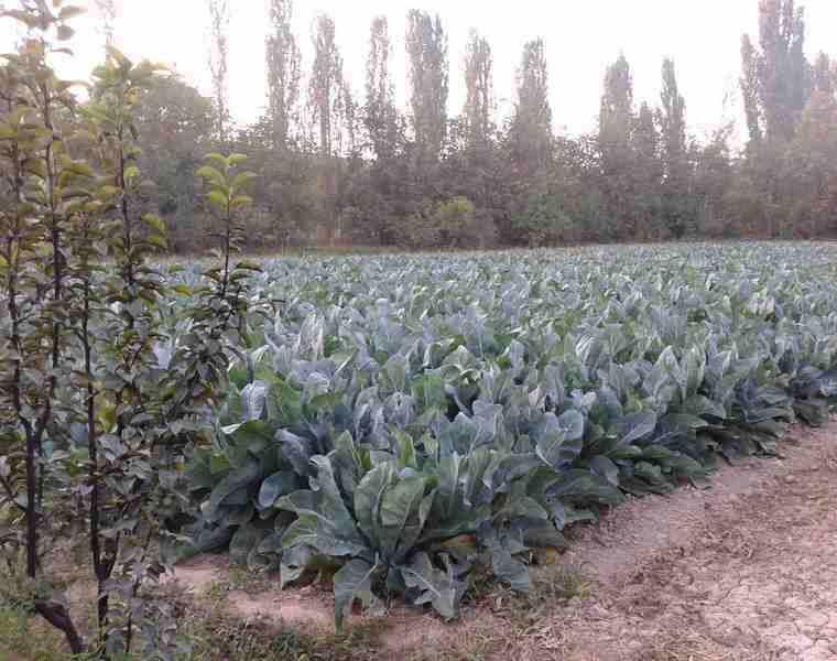 روستای رشوانلو