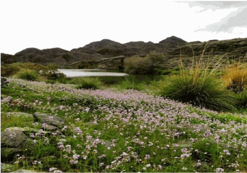مجموعه سدهای گشکندر شهرستان کهنوج