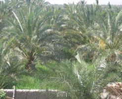 روستای خواجه عسکر