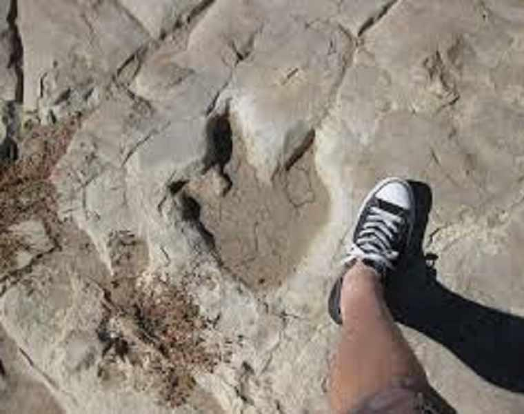 رد پای دایناسورها