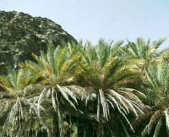 روستای دیدنی ده زرد شهرستان کهنوج