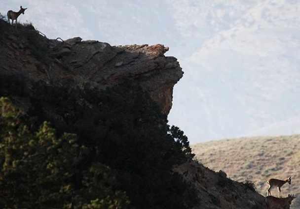 پارک ملی گلستان، بزرگترین پارک ایران، زیستگاه آهو، یوزپلنگ و خرس