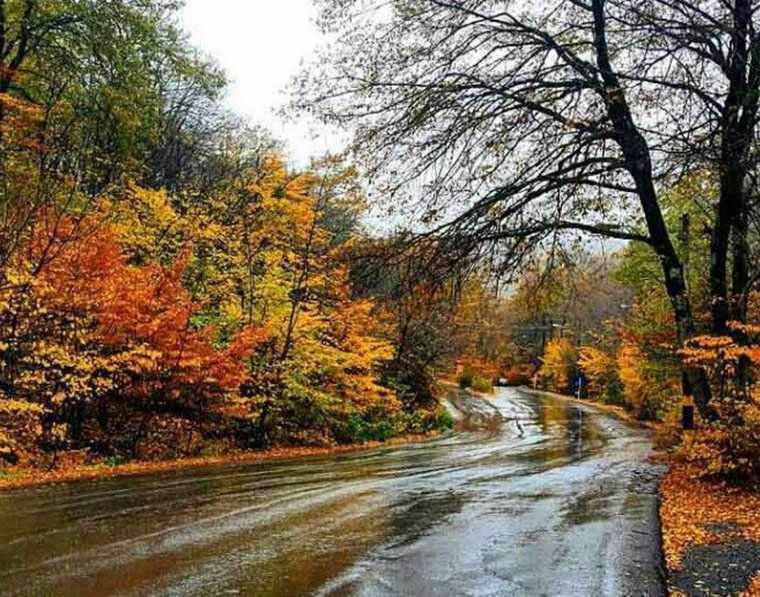 پارک جنگلی النگدره، جنگل چهار فصل گرگان