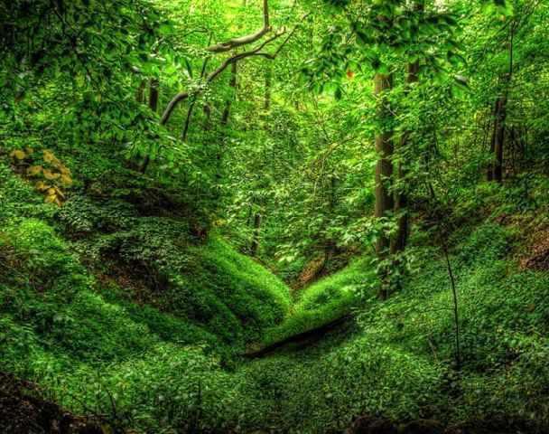 چشمه لاله گلستان، چشمه ای در دل کوه و جنگل