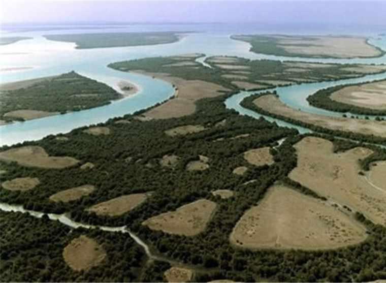 پارک ملی دریایی دیر-نخیلو، بهشت پرندگان و زیباترین پارک پرندگان در خاورمیانه