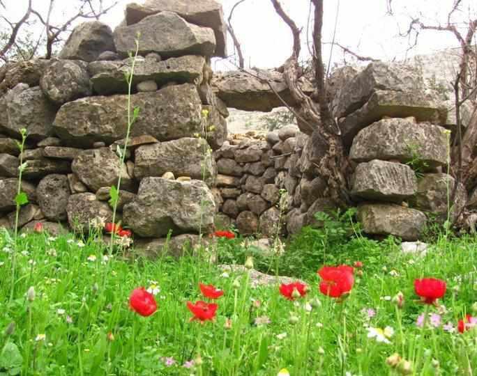 دشت های توصیف ناپذیر بهار همدان