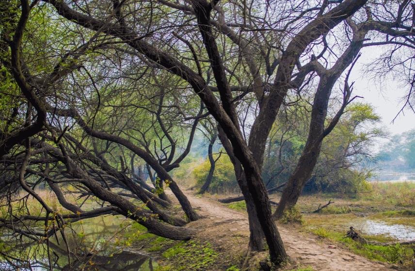 پارک جنگلی توسکا، پارکی در جنوب شهر تهران