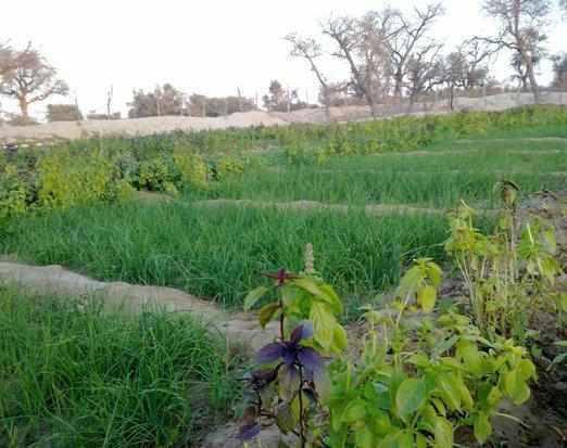 روستای توریان