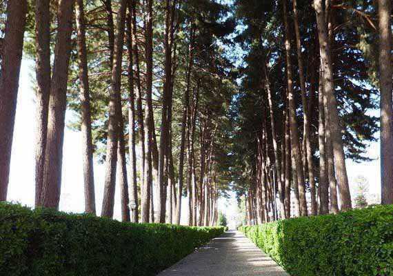 باغ امیرآباد