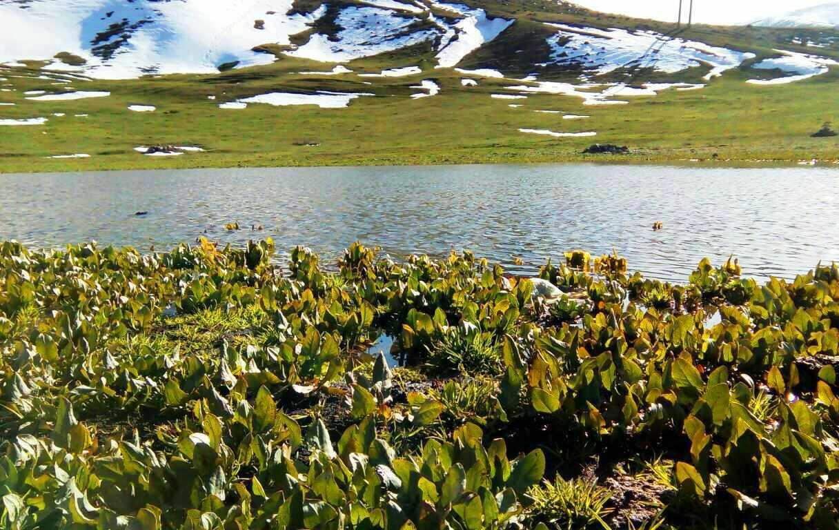 دریاچه قالغانلو